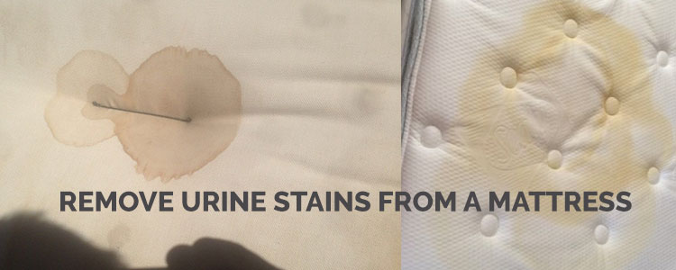 Remove Urine Stains from a Mattress - Sydney