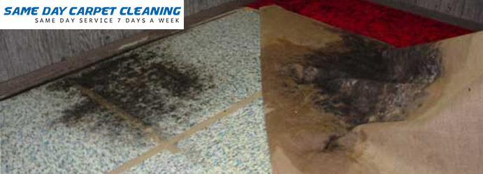 Carpet Mould Removal Mount Pleasant