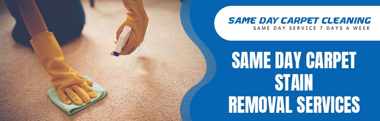 Same Day Carpet Stain Removal Services